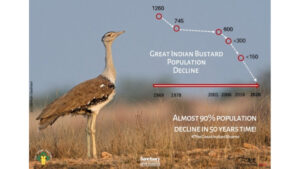 The Great Indian Bustard: What is 'great' about this bird?